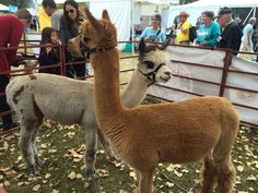 The #Taos Wool Festival 2015. Photo by Beth Dobos.