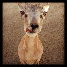 San Diego Zoo Safari Park @sdzsafaripark is on Instagram