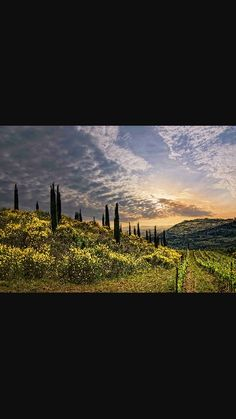 Vineyard, Outdoor, Outdoors, Vine Yard, Vineyard Vines, Outdoor Games, The Great Outdoors