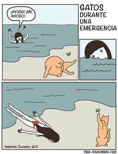 Gatos durante una emergencia.Imagen por Yasmine Surovec. Cats vs Human.