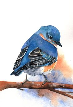 Bluebird Painting B029  Archival Print of bird por Splodgepodge, $15.00