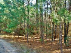Wooded 5.5 unrestricted acres with plenty of privacy for building your weekend retreat or full time residence. Property is almost at the end of a dirt road and is surrounded by other wooded property. While Lake L subdivision does not have direct riverlake access it is not far from Outback Marina or public boat launch.