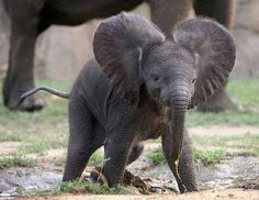 baby elephant @Maria Lieber