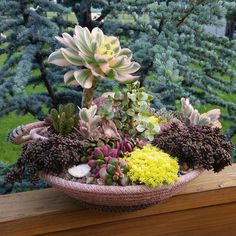 Nice succulent arrangement with a lariat rope pot by Karen Gruell