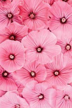 (via (94) Blossoms   Pinks   Pinterest)   chasingthegreenfaerie