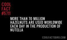 Cool-Fact-5711