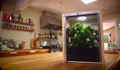 Vidéo: Une mini-serre pour faire pousser des légumes bio dans votre…