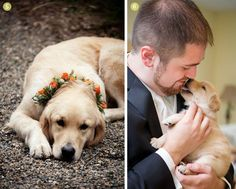 Finishing Touches: We Love Dogs in Weddings! | Exquisite Weddings Magazine #dogsinweddings #dogs #weddings