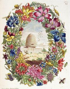 Bees & Flora by Hopkins Rare Books, Manuscripts, & Archives on Flickr. Bees & Flora Histoire générale des insectes de Surinam et de toute l'Europe