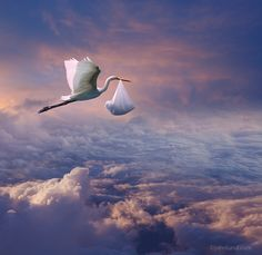 Picture of a stork (Egret) high above the clouds with a bundle (presumably a baby) in his beak delivering more than just good news! Famous Photography, Winter Photography, Creative Photography, Baby Pictures, Baby Photos, Baby Illustration, Illustrations, Disney Rooms, Baby Painting