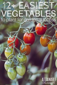 Choose these easy vegetables to grow for a successful garden harvest! Great for first time gardeners, of course, but these fail-proof crops are a must for everyone. Who doesn't like easy? This collection of a dozen easy vegetables to grow is a great starting point for planning your successful garden. #growingfood #garden #homestead via @Attainable Sustainable
