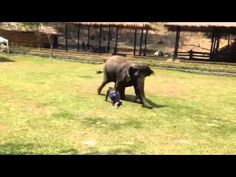 The Elephant's Caretaker Collapses To The Ground. What She Does? I Have CHILLS! | Mind Blowing Videos