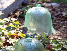 Extend Your Garden's Growing Season With Cloches and Cold Frames ...