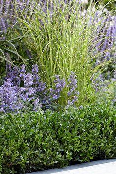 Iedereen met een buxus in de tuin vreest ervoor; de buxusmot. Wij vertellen je hoe je de buxusrups en -mot herkent en hoe je ze kunt bestrijden. Beautiful Birds, Beautiful Gardens, Chenille, Natural Beauty, Buxus, Herbs, Yard, Flowers, Design