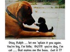 O.K. Ralph... lass es mir dir nochmal erklären.. Du bist groß, ABER, du bist ein Hund, Ich eine Katze... das macht mich zum Chef. Kapiert??