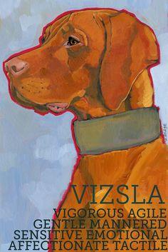 A Vizsla's characteristics. (If you add neurotic, rambunctious, hilarious)