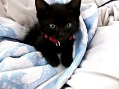 black kitten with green eyes - Google Search