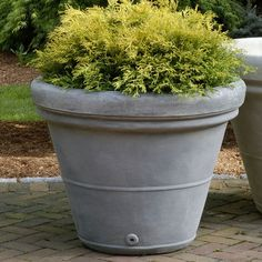 Campania International, Inc Estate Round Pot Planter Size: Large, Finish: Brownstone