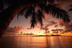 Image for Sunset With Palm Tree