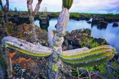 Surreal landscape, Isabella, Galapagos. More: http://www.teachingtraveling.com/2012/12/16/educational-group-tours-latin-america-spain/