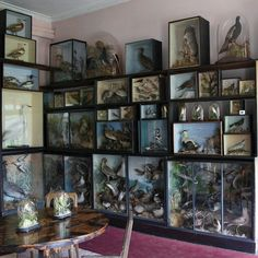 A Brief Compendium of the Most Excellent Walls Cabinet Of Curiosities, Natural Curiosities, Taxidermy Decor, Collections Of Objects, Displaying Collections, Historia Natural, My Ideal Home, Bizarre, Natural History