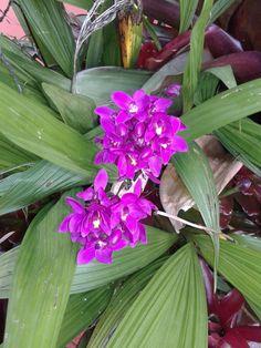 Orquidea florecida