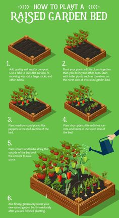 Garden Beds The Basics + Helpful Tips How to plant a raised garden bedHow to plant a raised garden bed