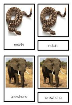 Maori Animal Activity pack zoo animals montessori inspired Giraffe, Elephant, Holiday Program, Animal Activities, Classroom Environment, Zoo Animals, Teaching Resources, Montessori, Language
