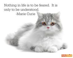 Yes if we'll take the time to try to understand #wisewords #quote #quoteoftheday #inspiration #motivation #mondaymotivation #motivationmonday #instaquote #quotesofinstagram #quotestagram #cat #catlover #prettykitty #instacat #catstagram #catsofinstagram
