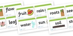 Plant and Growth Topic Word Cards - Plant, Growth, Word Card, Topic, Foundation stage, knowledge and understanding of the world, investigati...