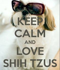 SHIH TZU MEANS LOVE LOVE LOVE! Another original poster design created with the Keep Calm-o-matic. Buy this design or create your own original Keep Calm design now. Perro Shih Tzu, Shih Tzu Puppy, Shih Poo, Cute Puppies, Cute Dogs, Dogs And Puppies, Doggies, Shitzu Puppies, Shih Tzus