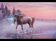 Horses, Erika, Spirit, Animals, Animales, Animaux, Horse, Animal, Animais