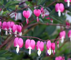 Father Julian's Blog: The Bleeding Heart