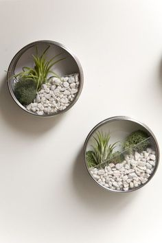 DIY Wall Gardens - designed as favors, but I am thinking a bunch would be super cute in our bathroom.