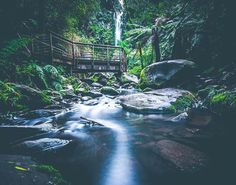 The Erskine Falls can be found along the Great Ocean Road in the Otway Ranges near Lorne. This beautiful capture of them is courtesy of @vincentcogliandro #liveinvictoria #victoria #vic #greatoceanroad #lorne #otwayranges #erskinefalls #falls #waterfall #forest #rainforest #river #beautiful #scenic #nature #love #australia #liveinaustralia by liveinvictoria