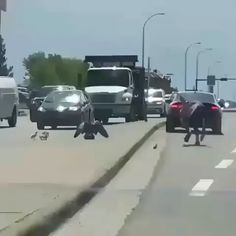 Brutal battle of a goose against a man on the road [GIF] Funny Animal Videos, Cute Funny Animals, Cute Baby Animals, Funny Dogs, Animals And Pets, Animals Planet, Beautiful Birds, Animals Beautiful, Vogel Gif
