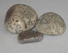 Stink Stone / Cream color with many holes / Michigan Lake