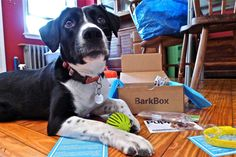 """""""Here's our dog Tuuli with her BarkBox. She was so excited for this month's that we didn't get a chance to snap a picture!"""" - From Ilyssa K. Use code PITBULL SAVE $5"""