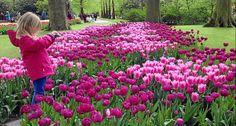 Keukenhof, o jardim de tulipas que parece pintura, colore a primavera na Holanda