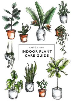 How to Care for Indoor Plants | a pair & a spare | Bloglovin'