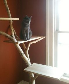 DIY cat condo Total recycle and so natural for cats to want to get up high. Another awesome idea for your local shelter. Siberian Kittens, Diy Cat Tree, Cat Perch, Cat Towers, Wooden Cat, Cat Activity, Cat Enclosure, Cat Scratcher, Cat Condo