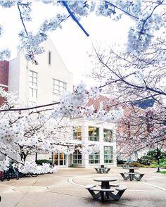 Look - Campus: on Looks Annalia Belmont University video