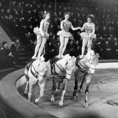 Riding High Big Top, Gymnastics, The Past, Horses, Dance, Photography, Animals, Vintage, Fitness