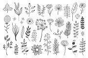 Plants & Herbs - Illustrations - 2