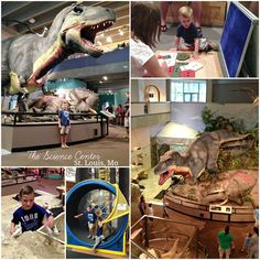 St. Louis Science Center   St. Louis, MO  http://www.slsc.org/