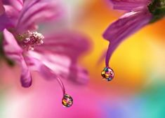 Water drops - Flowers Wallpapers and Images Water Drops, Jewelry Art, Belly Button Rings, Drop Earrings, Flowers, Image, National Geographic, Wallpapers, Water Droplets
