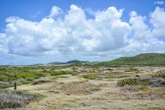 Martinique : la Savane des Pétrifications