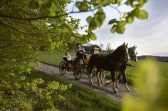 Genießen Sie eine Kutschenfahrt beim Gaisriegelhof in Sebersdorf. #gaisriegelhof #sebersdorf #kutschenfahrt Horses, Animals, Environment, Getting Married, Animales, Animaux, Horse, Animal, Animais