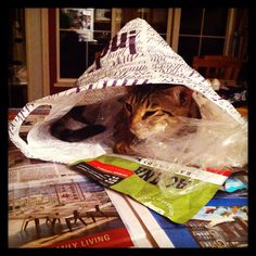 Forget toys, cats love shopping bags
