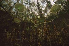 etonnantes photographies sous marines des marais de floride par karen glaser 12   Etonnantes photographies sous marines des marais de Florid...